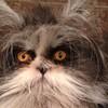CAT FRIDAY: Meet the Internet's latest feline sensation, Atchoum