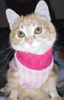 Frosty's life started out grimly, but now she plays all day and wears cute pink sweaters. - FROSTY THE FROZEN KITTEN FACEBOOK PAGE