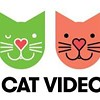 CAT FRIDAY: Monday edition update on the Internet Cat Video Film Fest