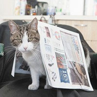 "CAT FRIDAY: Notable runners up for ""Best Local Cat"" in the Best Of readers poll"