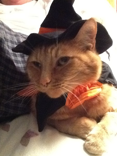 Sam, an alumni of SpokAnimal, looked adorable this Halloween. From Spokane, submitted by Sallie Sears.