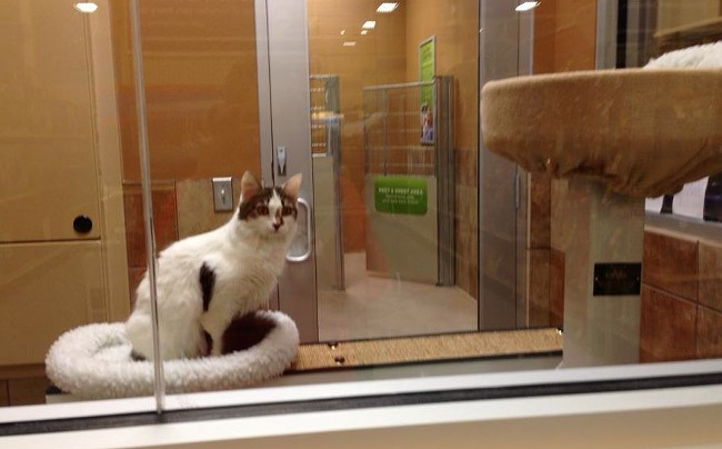 How could customers resist wanting to go inside to meet all of the adoptable animals at the new center? - JENNA CARROLL, SPOKANE HUMANE SOCIETY