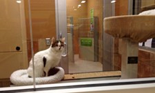 CAT FRIDAY: Spokane Humane Society's new adoption center at PetSmart