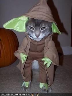 yoda_cat.jpg