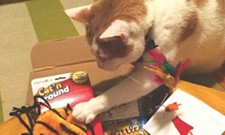CAT FRIDAY: The best gifts of 2014 for the cats in your life
