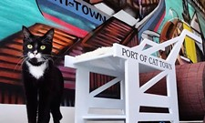 CAT FRIDAY: The cat cafes are coming