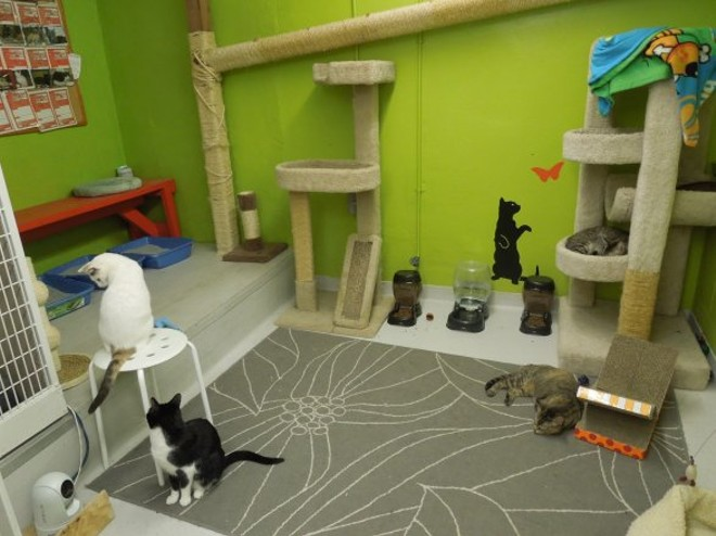 APA!'s ward for Feline Leukemia-positive cats is a cozy, calm sanctuary. - CHEY SCOTT