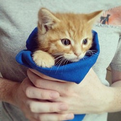 """They sure are cute, but there's often too many for shelters to handle when """"kitten season"""" hits. - CHEY SCOTT"""