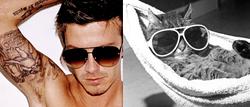 mencats1.jpg