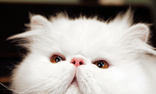 CAT FRIDAY: The world's latest cat stars — Pompous Albert and Brimley