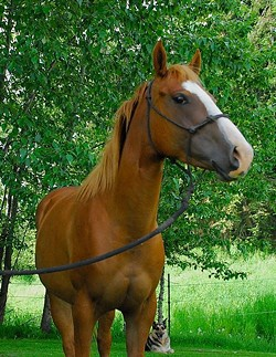 One of the six horses looking for a new home this weekend. - SCRAPS