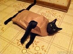 bagcat.jpg