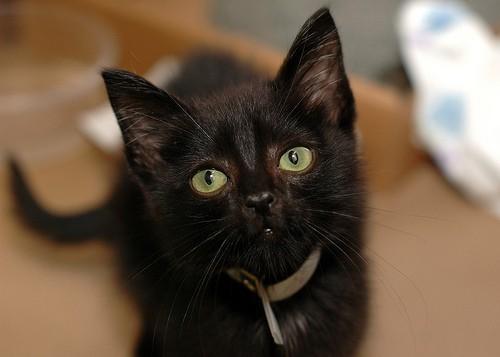 Cat Friday Today Is Black Cat Appreciation Day Bloglander