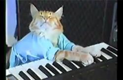 Keyboard Cat is Washington state's original famous, viral cat.