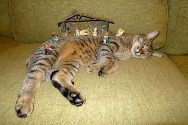 A whole nativity scene!
