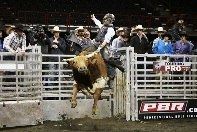Cody Ford, of Hermiston, Ore., rides 901 Knock Knock during the Championship Round. He rode 4.61 seconds before falling off the bull. - YOUNG KWAK