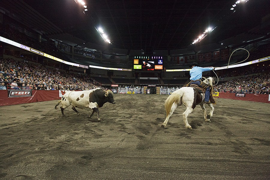 Cowboy Safety Man Jacob Stacy, of Moses Lake, Wash., directs a bull on Saturday. - YOUNG KWAK
