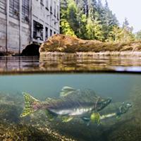 DamNation documentary on Northwest, national dams showing tonight