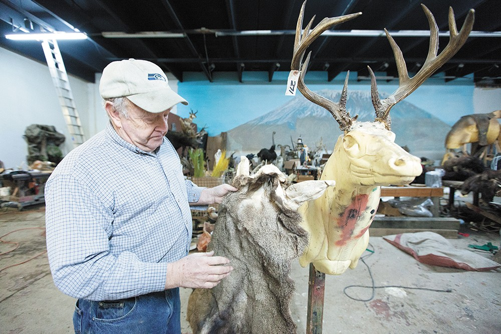 """Dave Drury holds a tanned deer """"cape"""" at Knopp Taxidermy. - YOUNG KWAK"""
