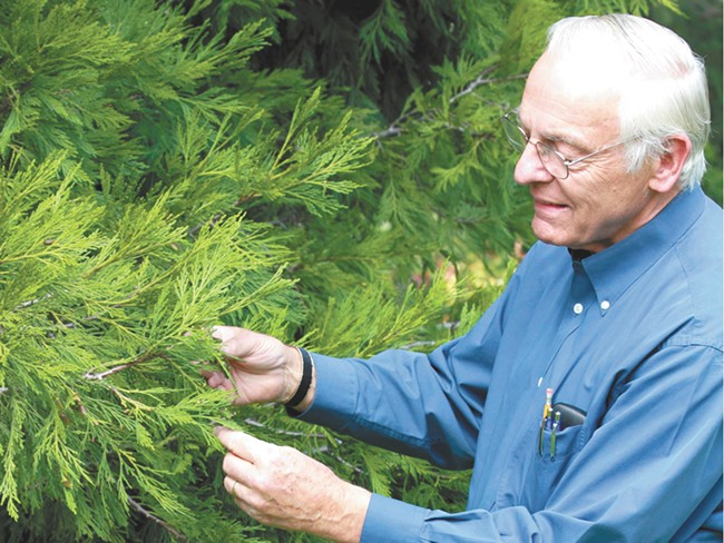 Ed Lester shares his passion for Spokane's trees with his guided tours. - JOE KONEK