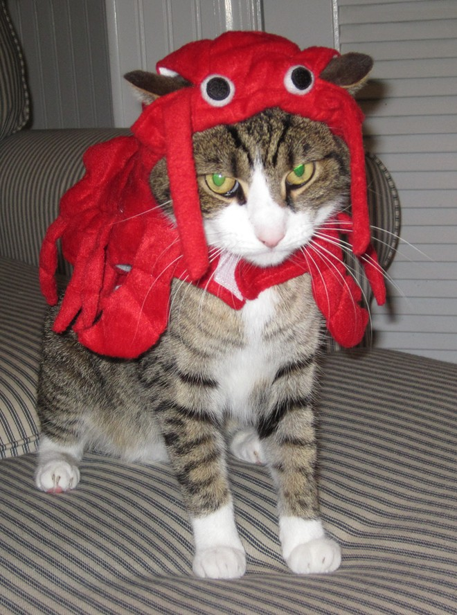 Geo the lobster, from Philadelphia. Submitted by Rachel.