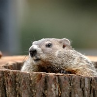 Grab a drink with Punxsutawney Phil and River City Brewing