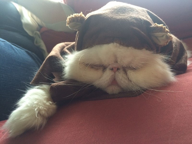 Gwen the Ewok, from Olympia, Wash. Submitted by Anna E.