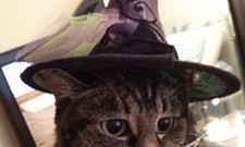 HALLOWEEN: Inlander staff cats in costume