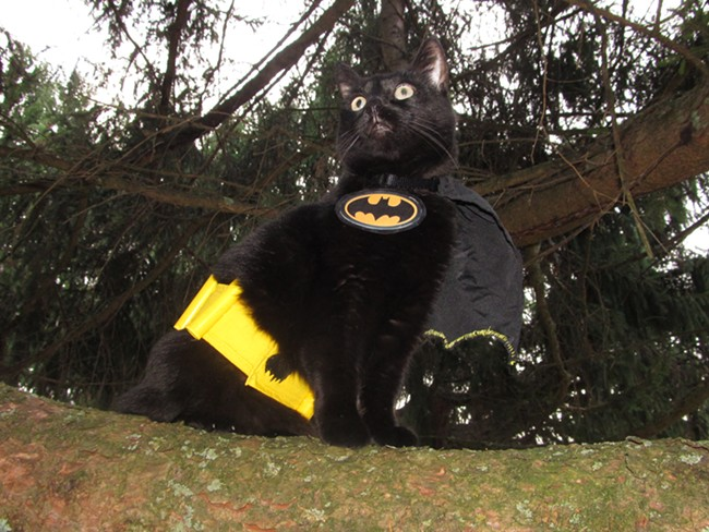 "Harley the ""Bat Cat"" from Howard, Penn. Submitted by Beth and Colleen."