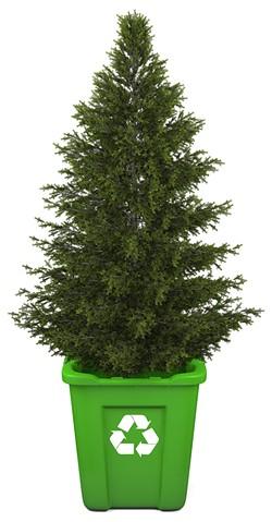 tree-recycle.jpg