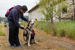 Juan Avila calms down Aika, a one-and-a-half-year-old Siberian Husky.