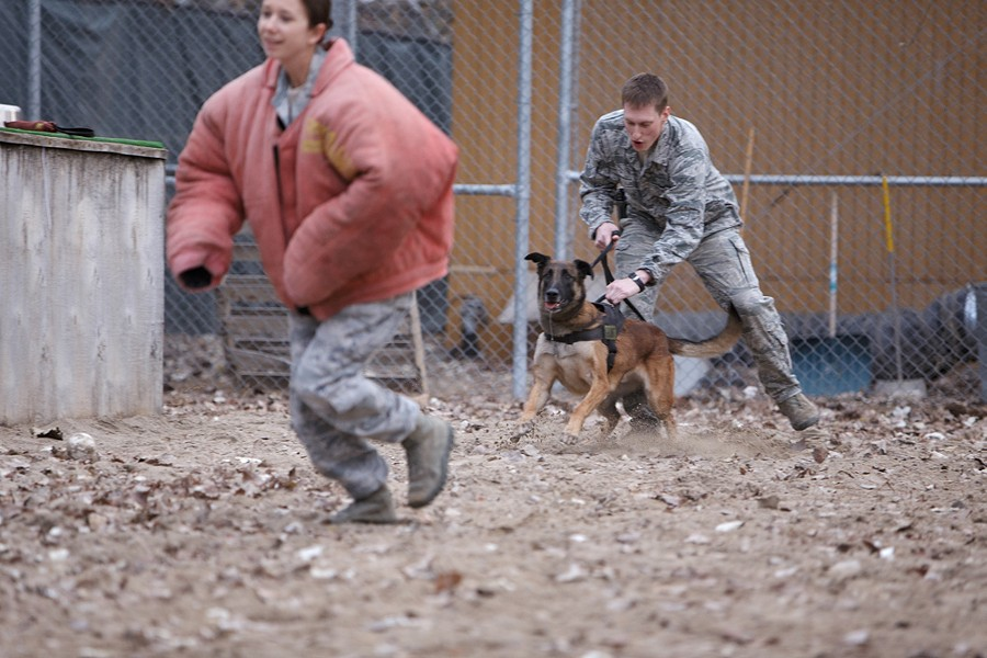 During a training exercise, 376th Expeditionary Security Forces Squadron/K9 Handler Senior Airman Matthew Pettit, center, takes Military Working Dog Yyoda off leash after Kennel Master E5 Staff Sergeant Janna McDonald disregards an order to halt and runs. - YOUNG KWAK