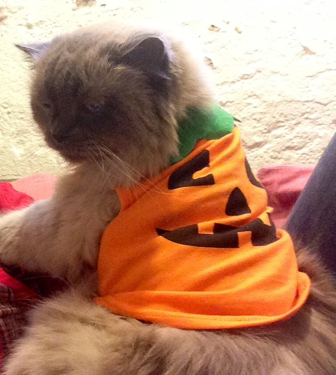 Kanga, the 15-year-old Himalayan, from Spokane. Submitted by Katrina.