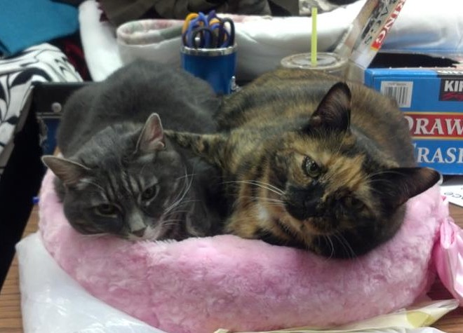 Kiera (right) cuddles the late store cat Mouse, of NW Christian Thrift.