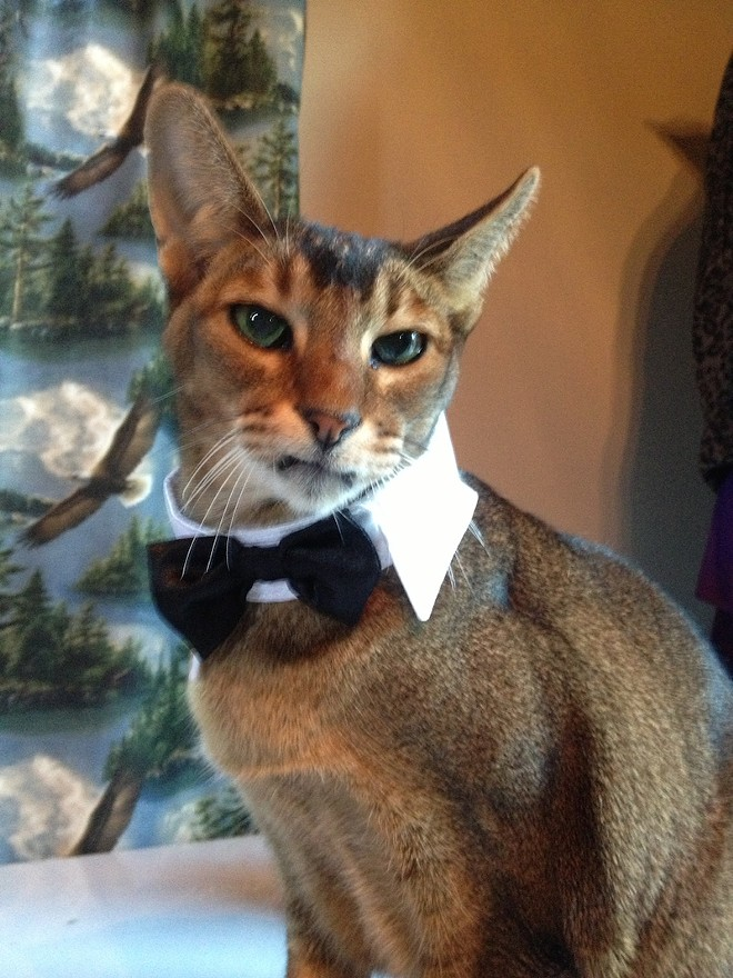 Leaper, from Columbia, Pennsylvania (who also entered last year!) dressed up in his dinner tux this year. Submitted by PJ L.