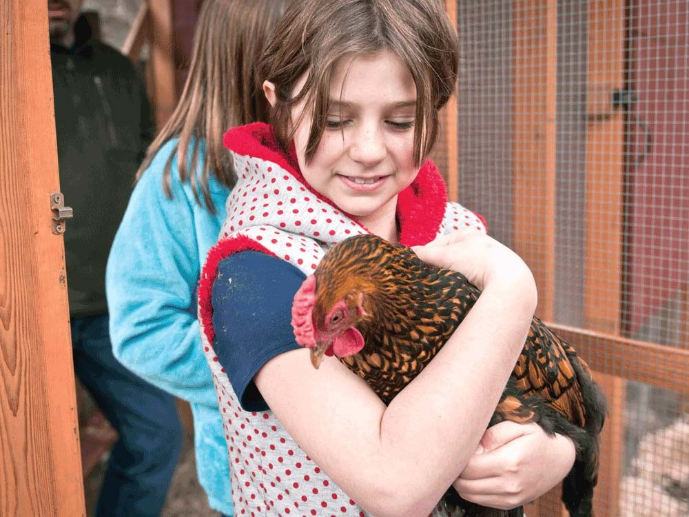 Lily Goodwin holds one of her family's backyard chickens. - AMY HUNTER