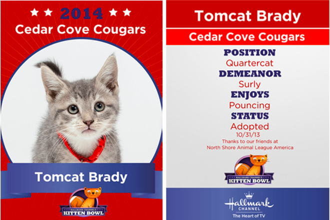 Little Tomcat Brady takes charge of the ball in a matchup against the fearless North Shore Bengals for the first annual Kitten Bowl. - HALLMARK CHANNEL