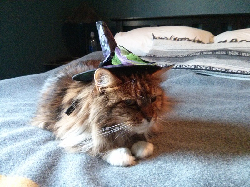 "Maddie, a cute ""old witch,"" from Spokane, Wash. Submitted by Will."
