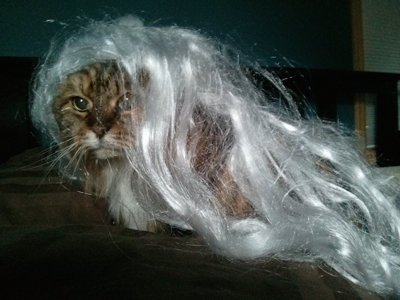 Maddie, the 1,000-year-old sorceress cat, from Spokane, Wash. Submitted by Will H.