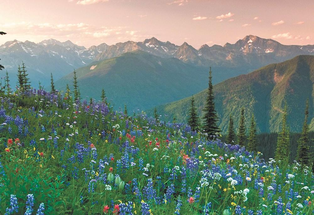 Meadows and mountains near Nelson, B.C. - DAVID GLUNS PHOTO