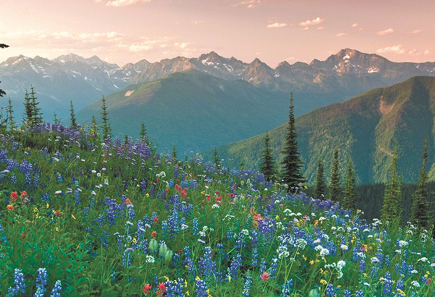 Meadows and mountains near Nelson, B.C. - DAVID GLUNS PHOTO