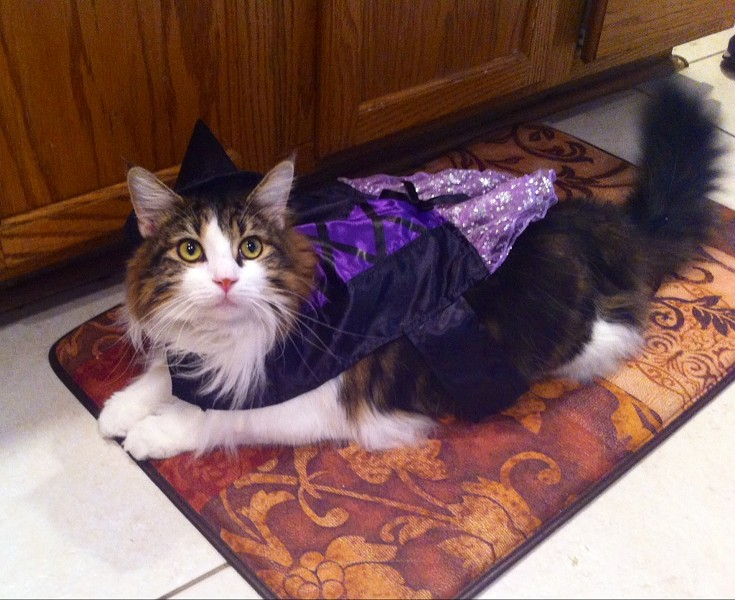Melvin the witch, from Pittsburgh, Penn. Submitted by Abby.