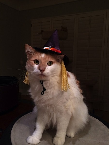 Monkey, another cute witch, from Long Beach, Calif. Submitted by Courtney.