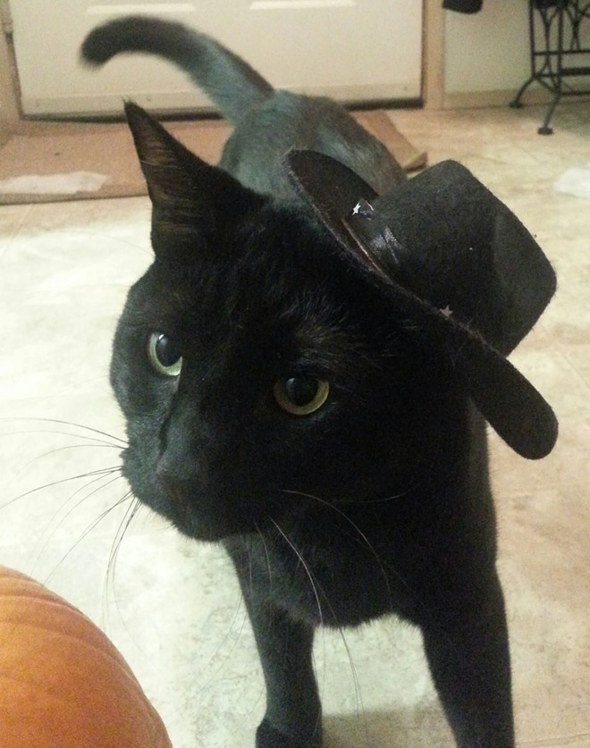 Nathan the cowboy cat, from Spokane Valley. Submitted by Amanda.