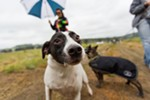 Nellie, a 3-year-old Jack Russell Terrier mix, is not camera shy. Her owner Jade Hardee, holds Nellie back on her leash.