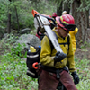 Forest Service says wildfires burning up money for trails, repairs and research