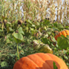 October is here, and with it haunted houses and corn mazes galore