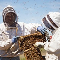 Photos: Local beekeepers and their hives Olson's Honey Field Supervisor Matthew Shakespear, left, and employee Furmin Lua trade bee hive frames to inspect. Young Kwak