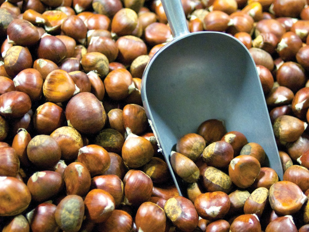 Once forgotten, the chestnut is now back in the scoop. - GUY HAND