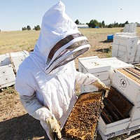 Photos: Local beekeepers and their hives Owner Mike Durst examines a bee hive frame at Mark T. Durst and Sons. Young Kwak